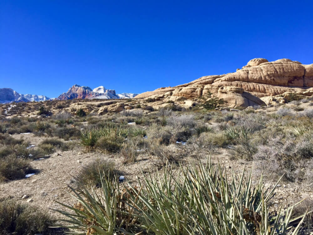 The view from our day of Red Rock Canyon hiking