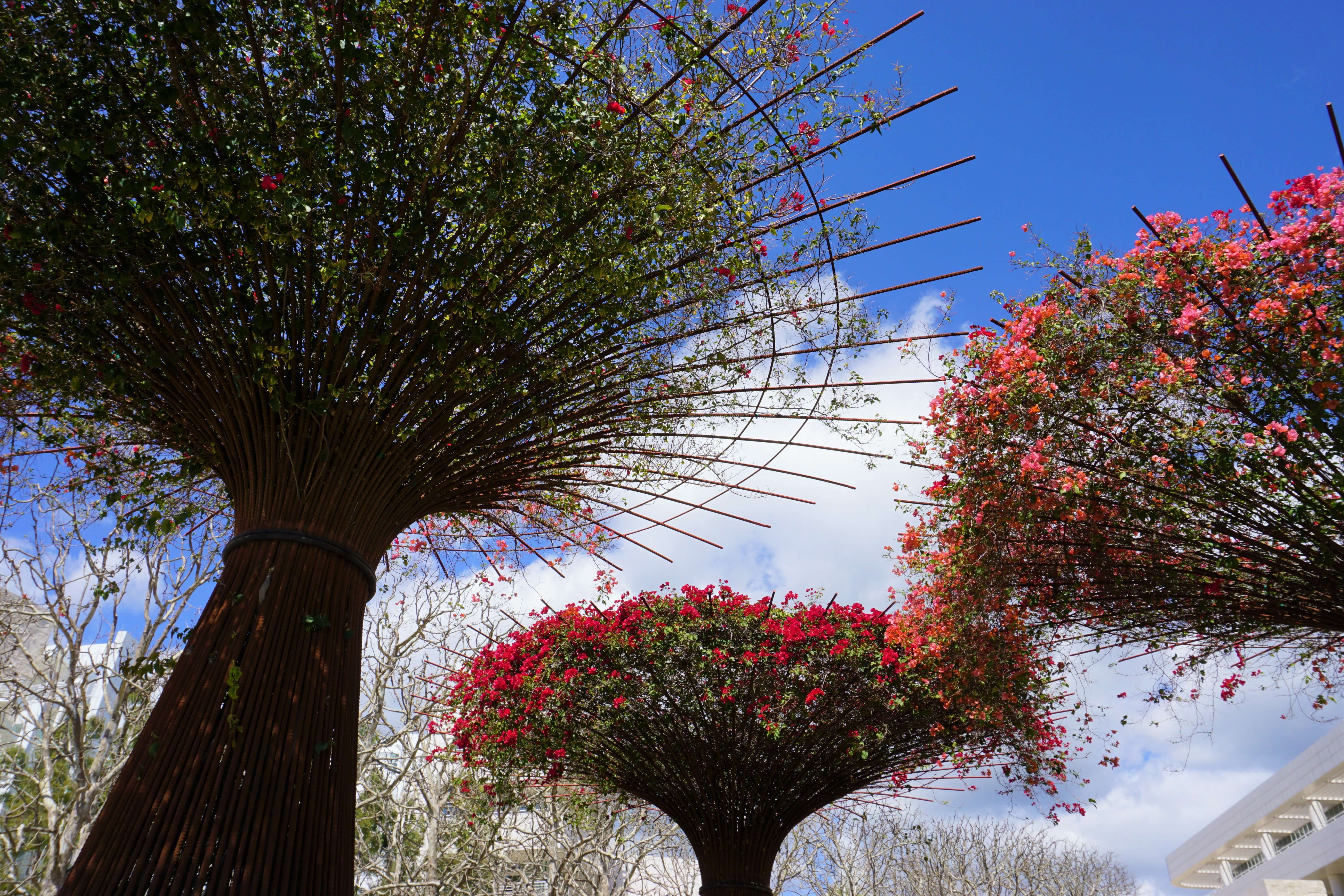 More views of the Getty gardens--flowering plants atop tall wooden trellises