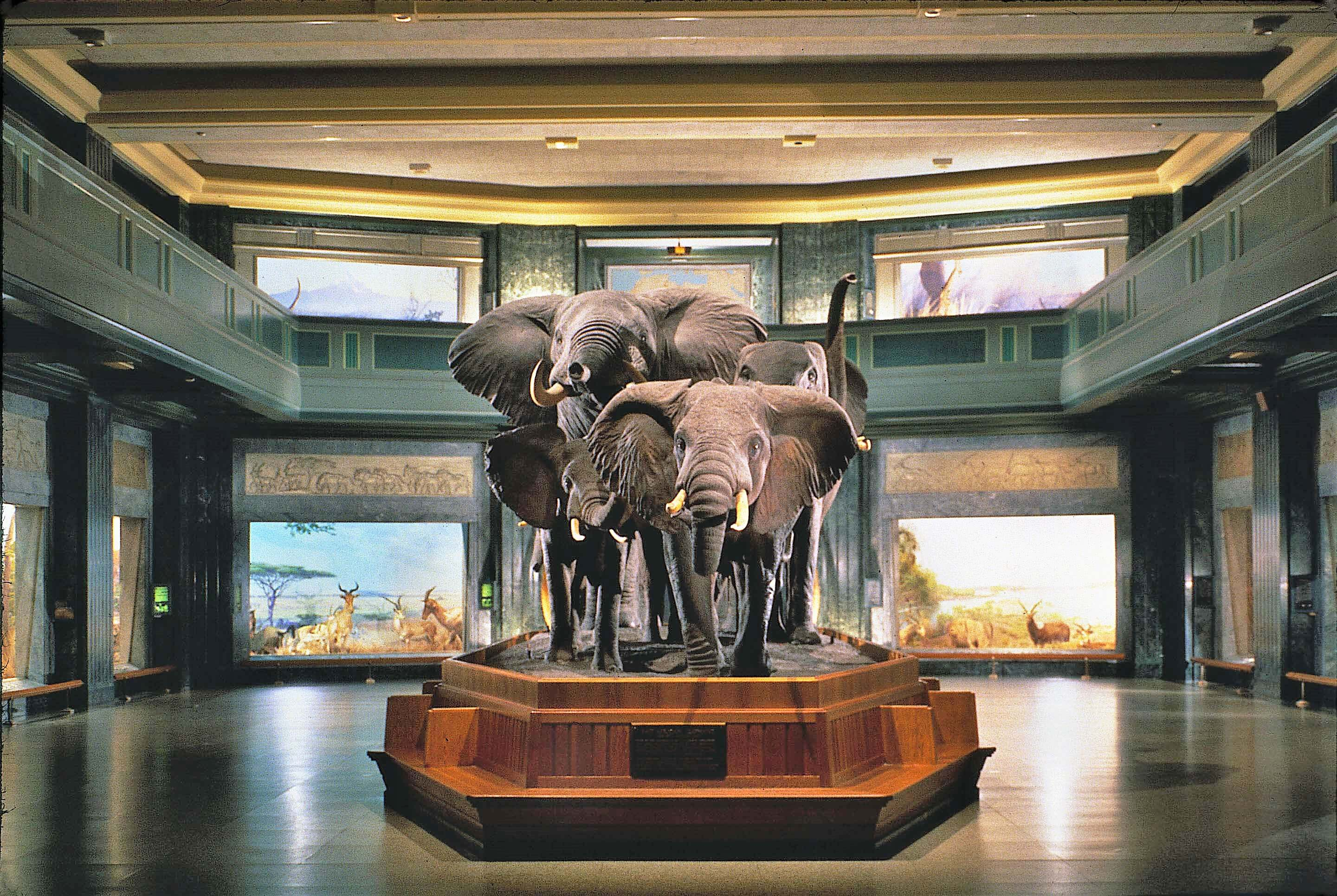 African Mammal Hall at American Museum of Natural History--photo courtesy of AMNH