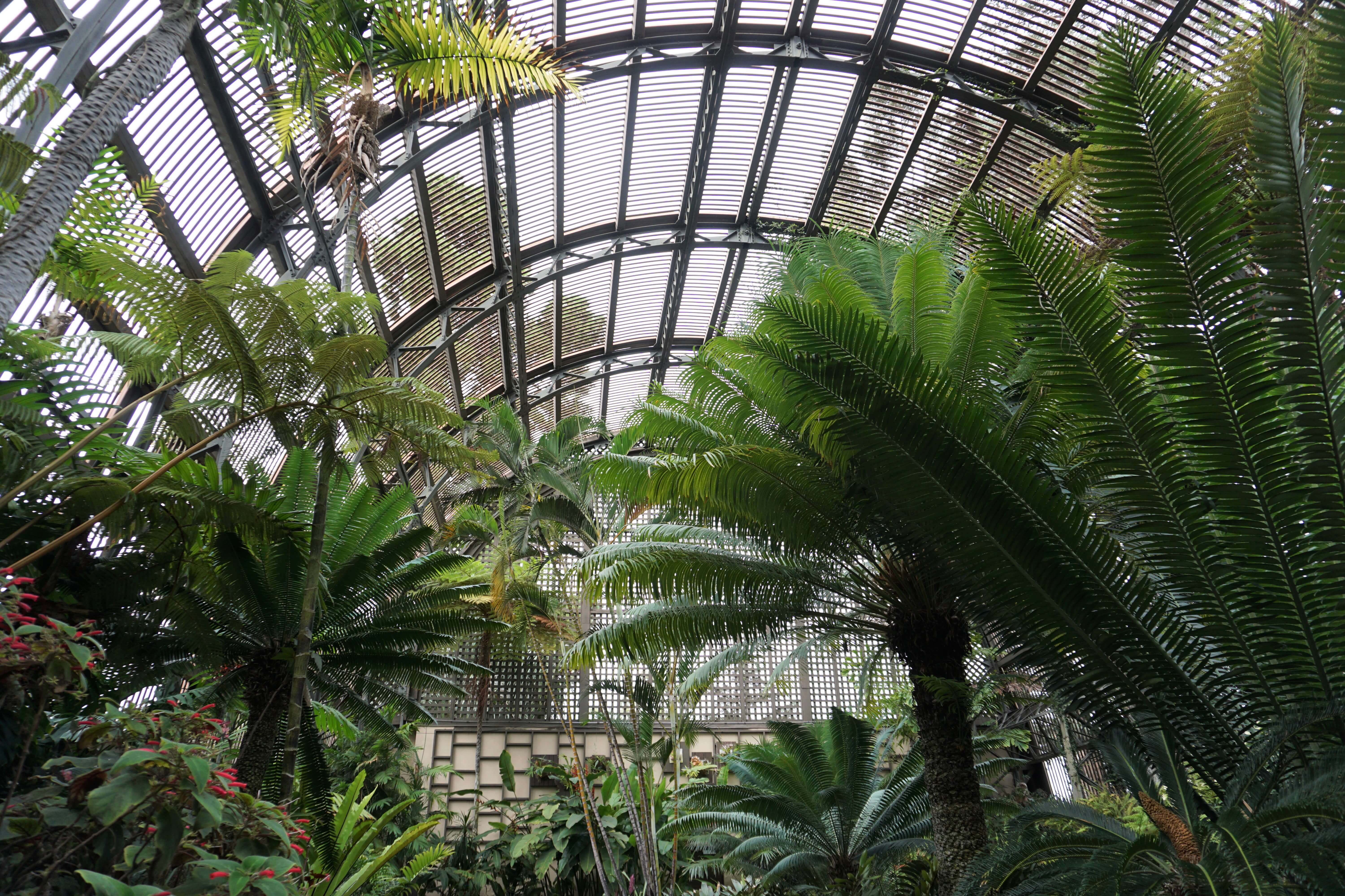 Interior view of the Botanical Building in Balboa Park, San Diego