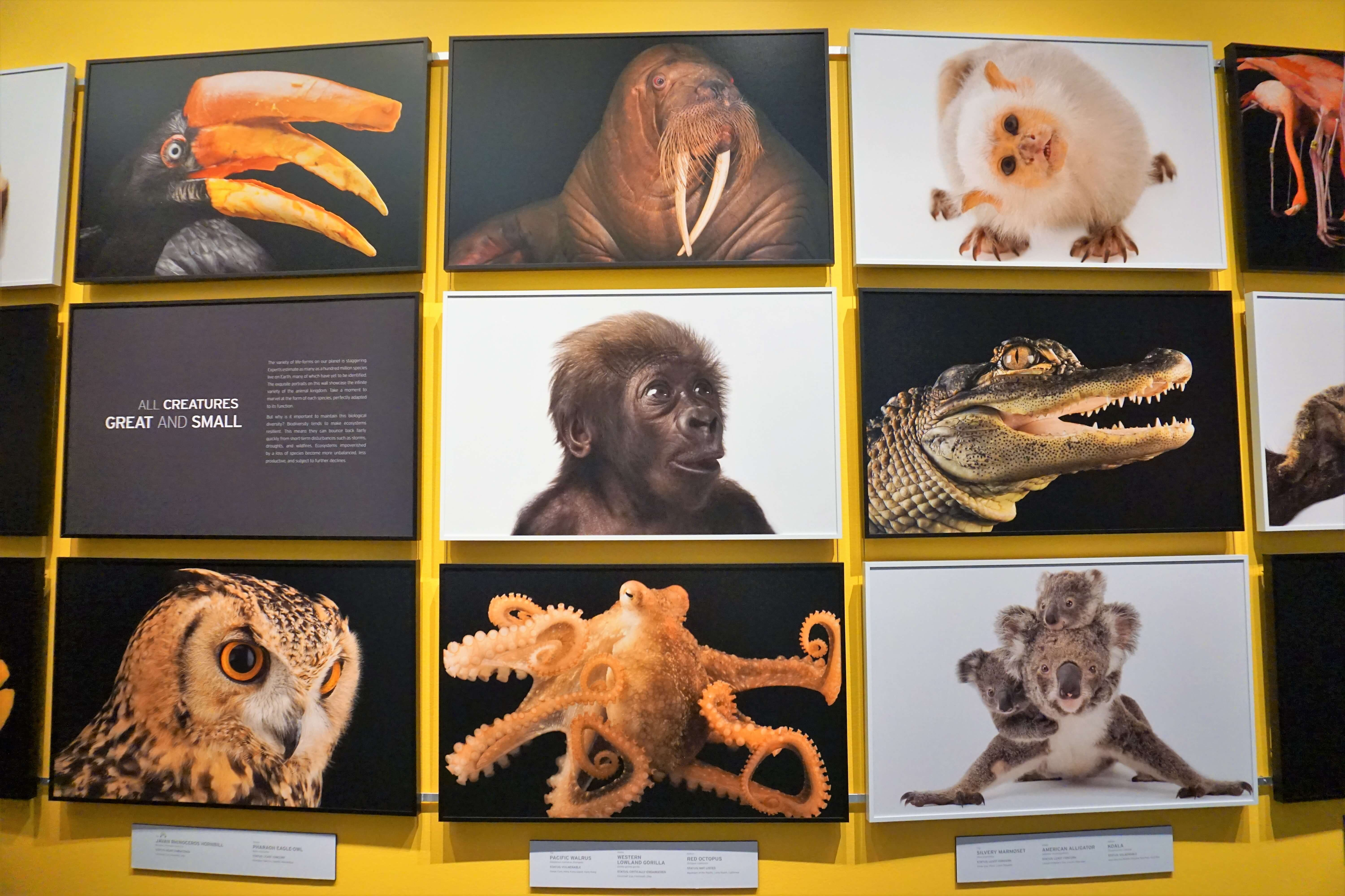 Photo Ark exhibit at the Annenberg Space for Photography