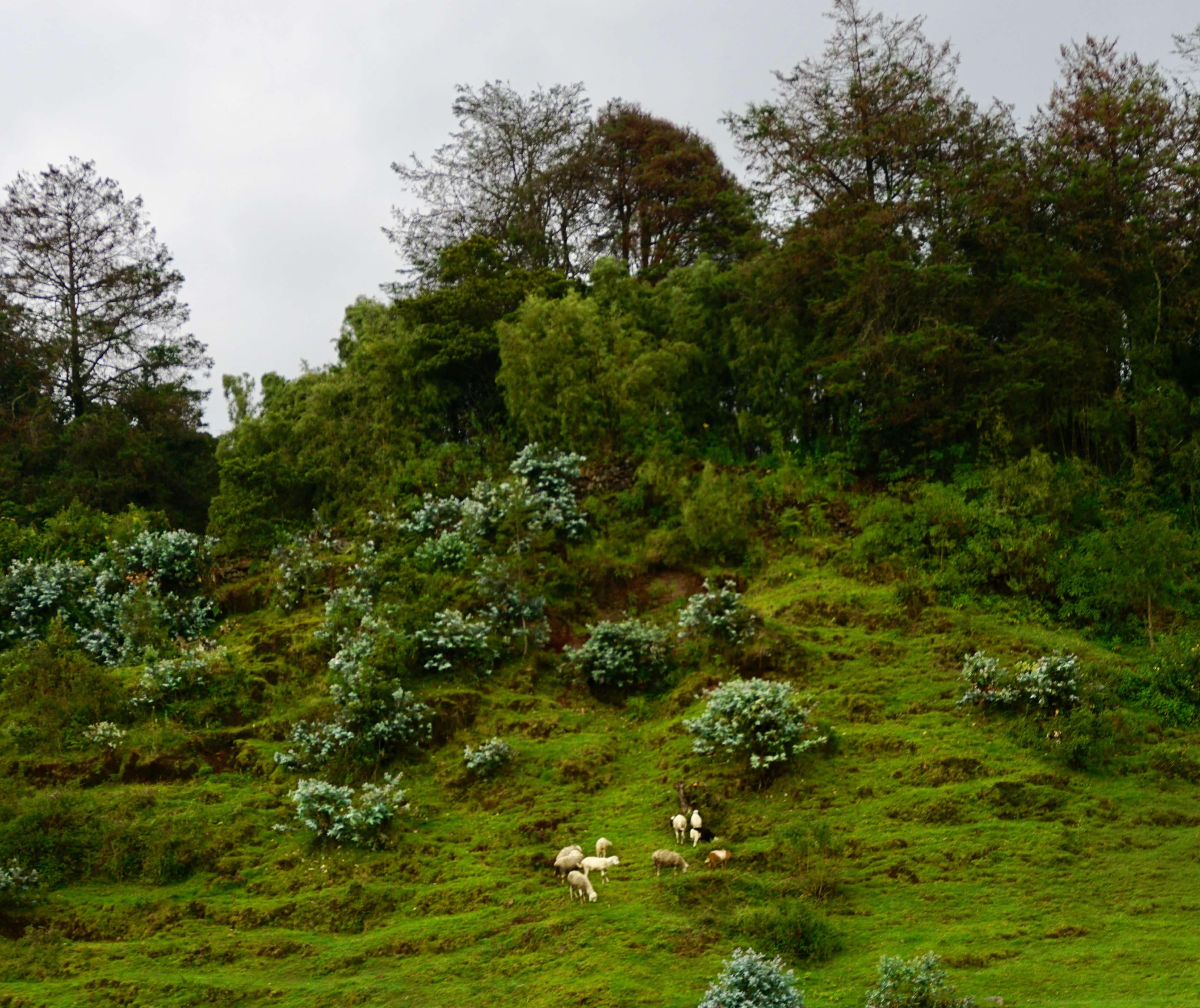 Farmland outside Volcanoes National Park in North Rwanda