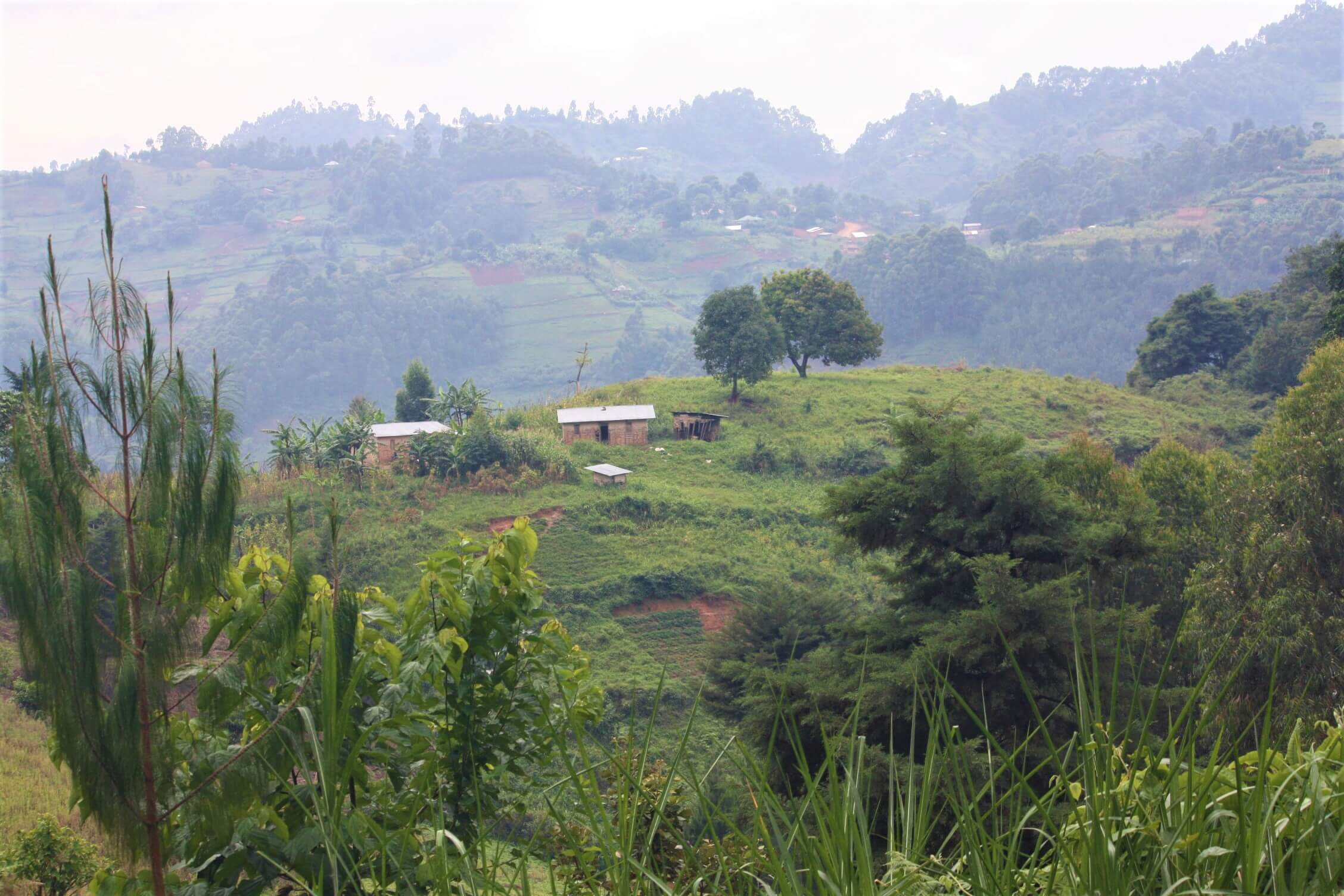 Ugandan farm land seen during trek