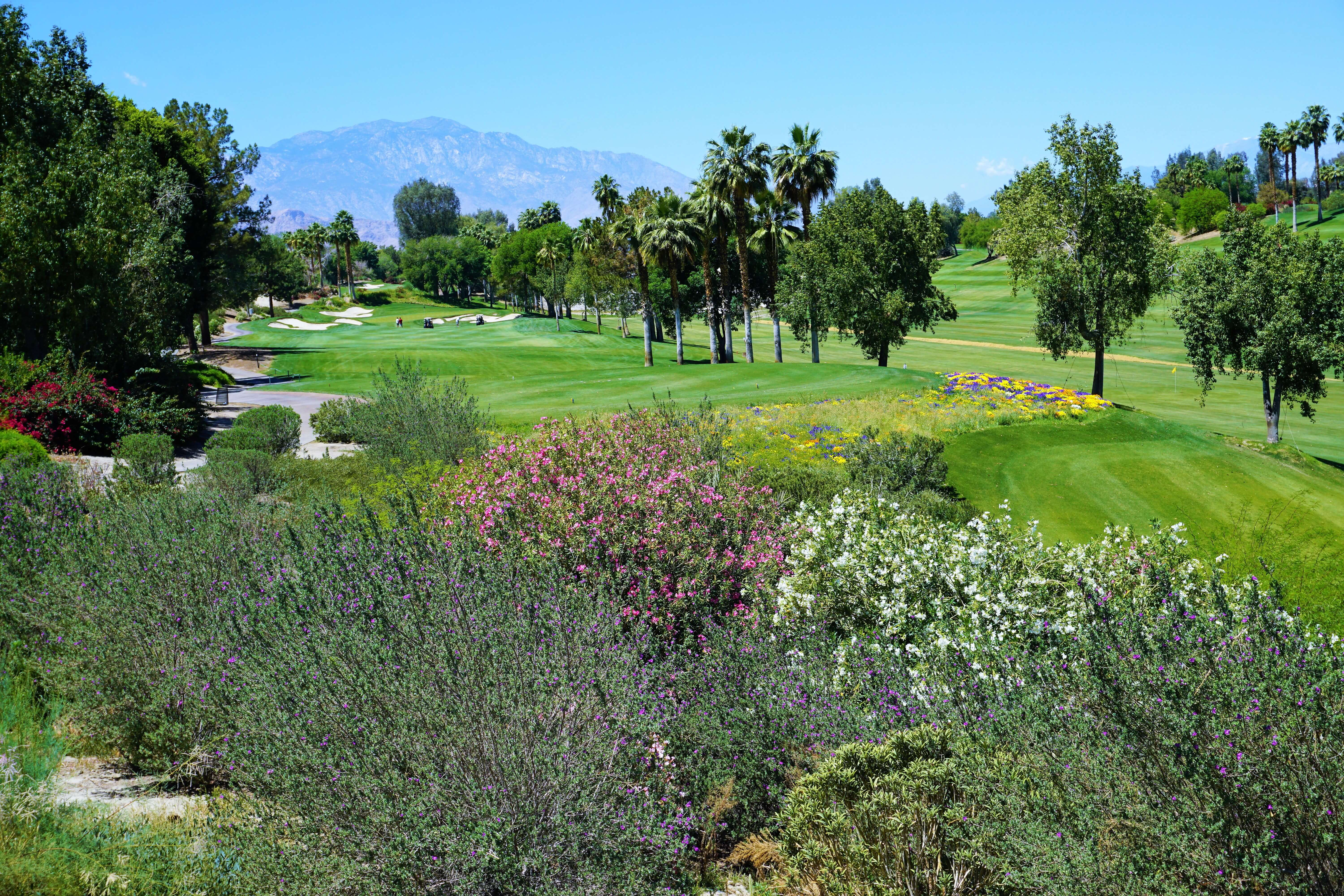A golf course in Palm Springs