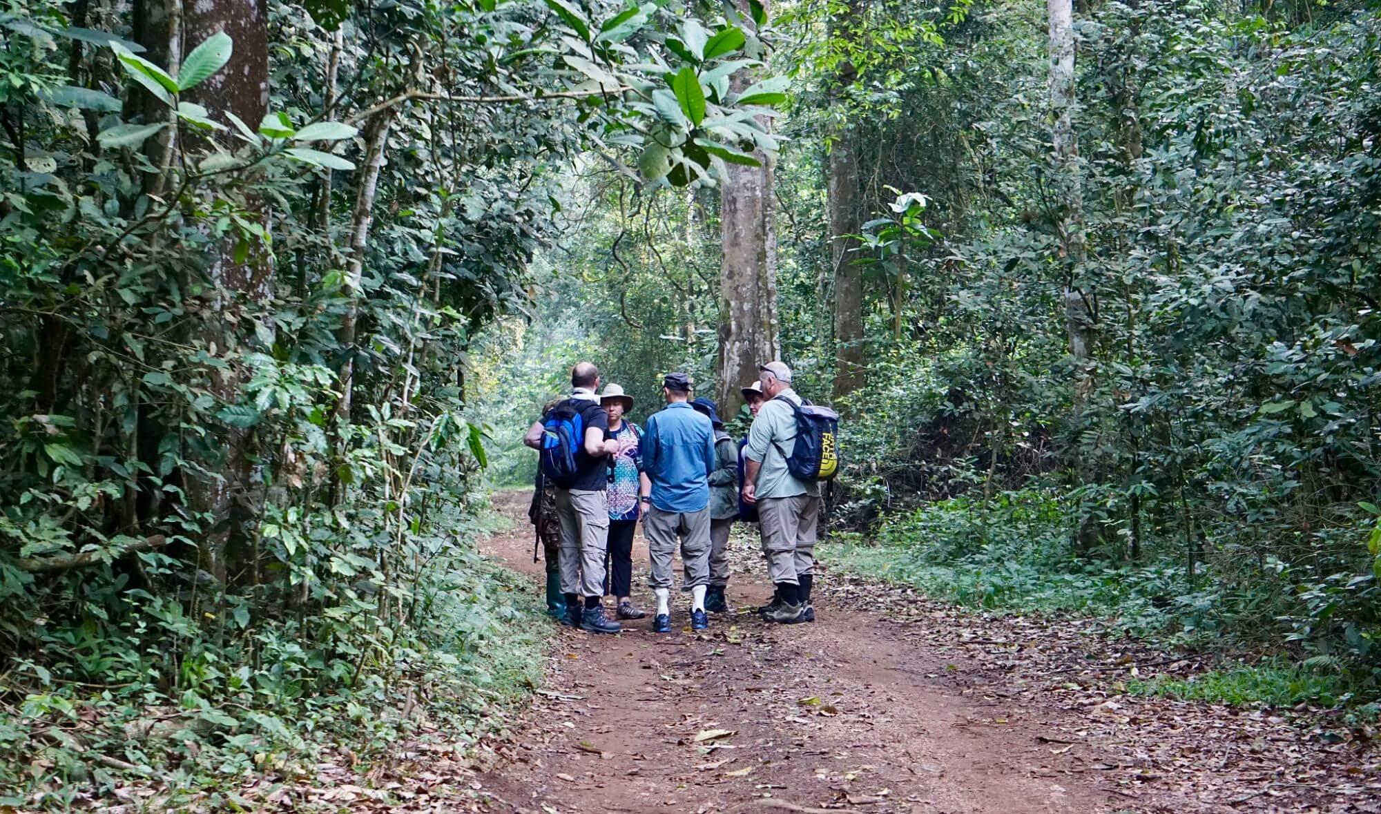 Start of the chimpanzee trek in kibale national park uganda