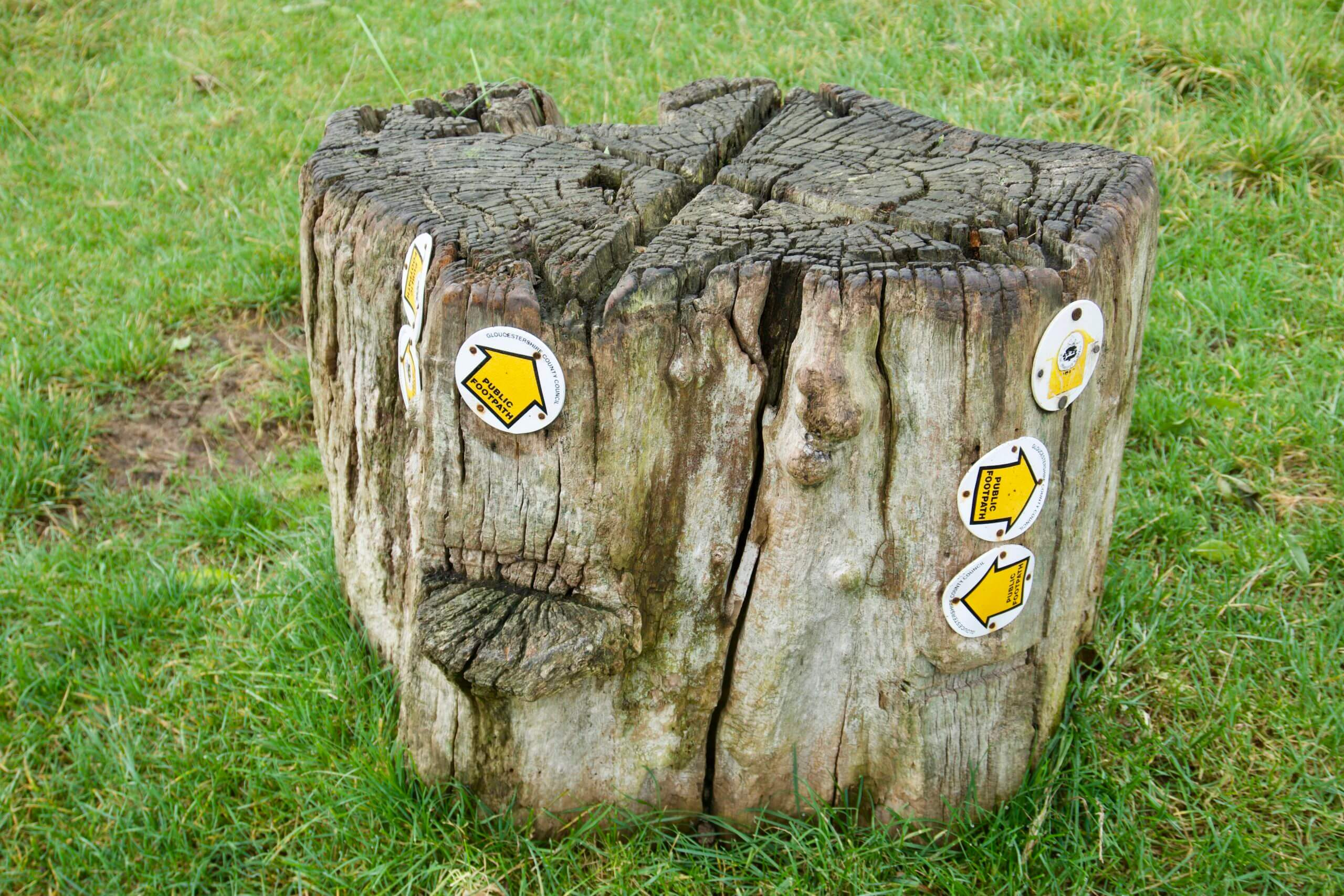 Trail markers on a stump