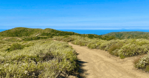 Hiking In Laguna Beach–5 Trails To Try