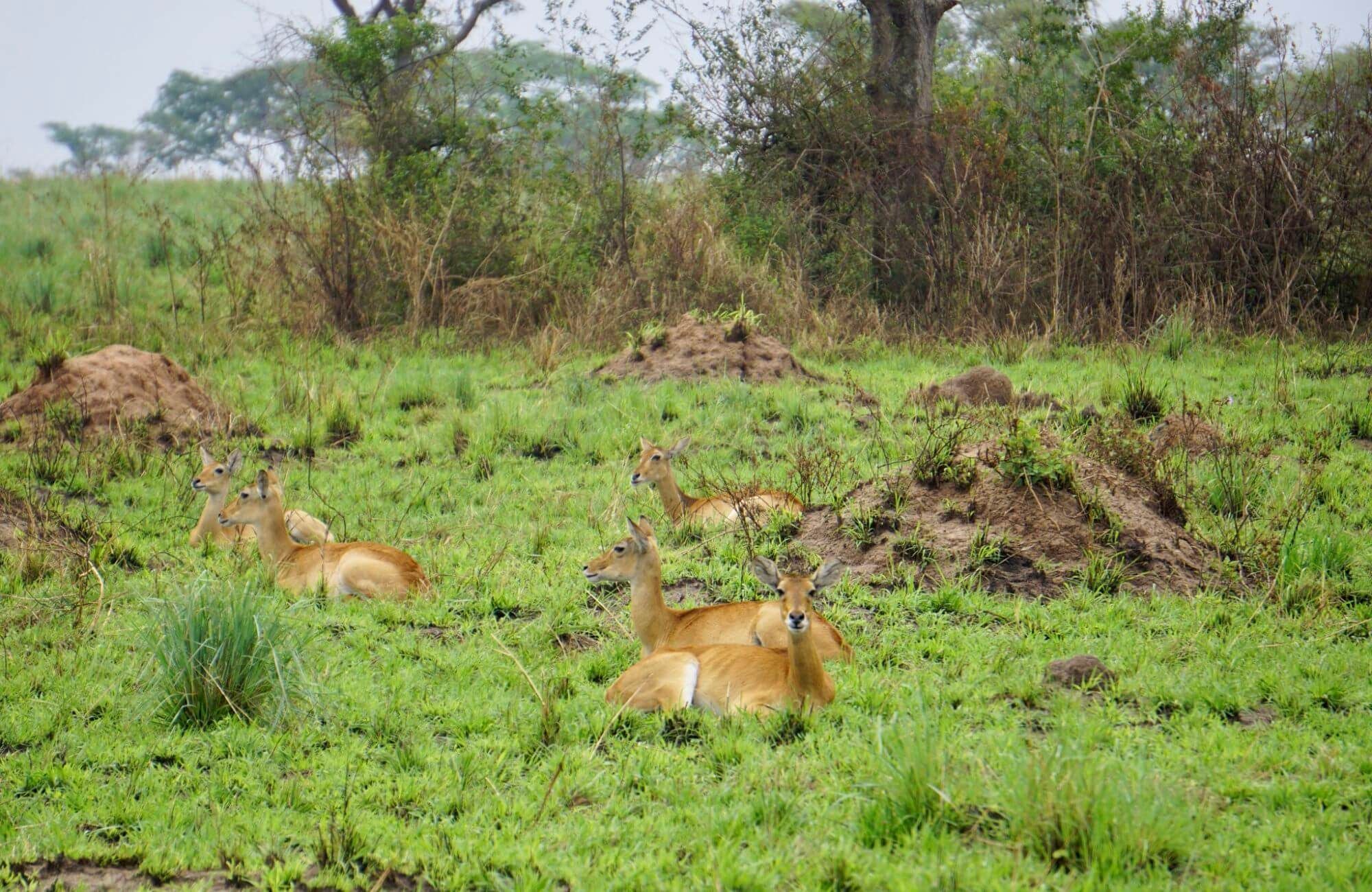 Animals in Queen Elizabeth National Park Uganda