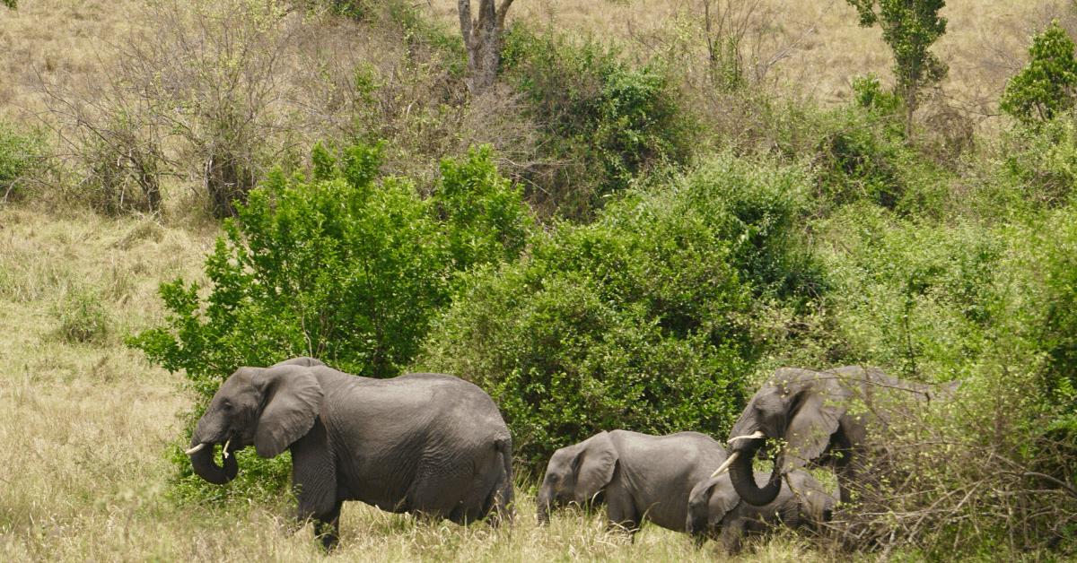 A Safari In Queen Elizabeth National Park Uganda
