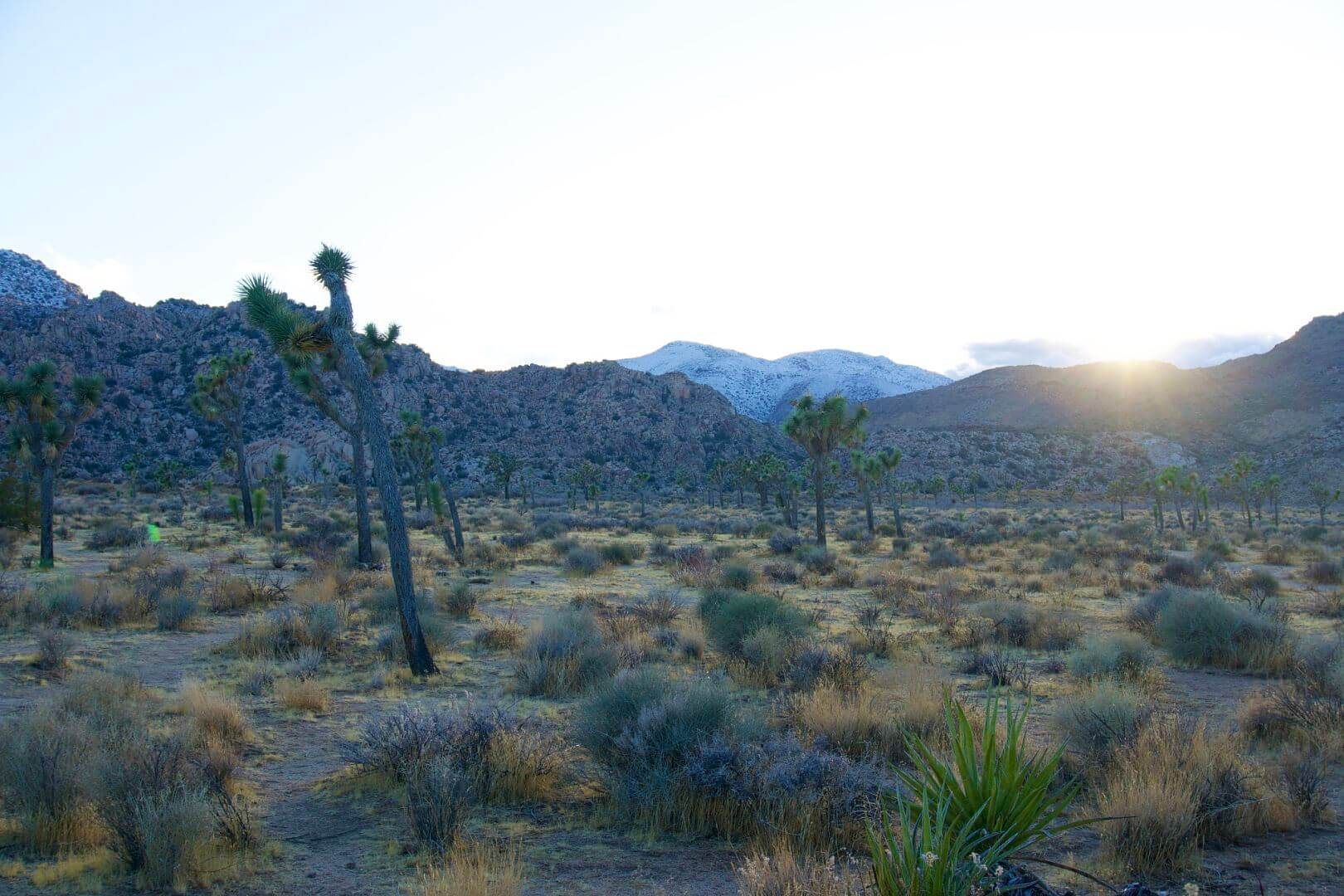 The Perfect Day Trip To Joshua Tree