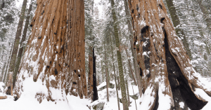 Why You Should Visit Sequoia National Park In Winter