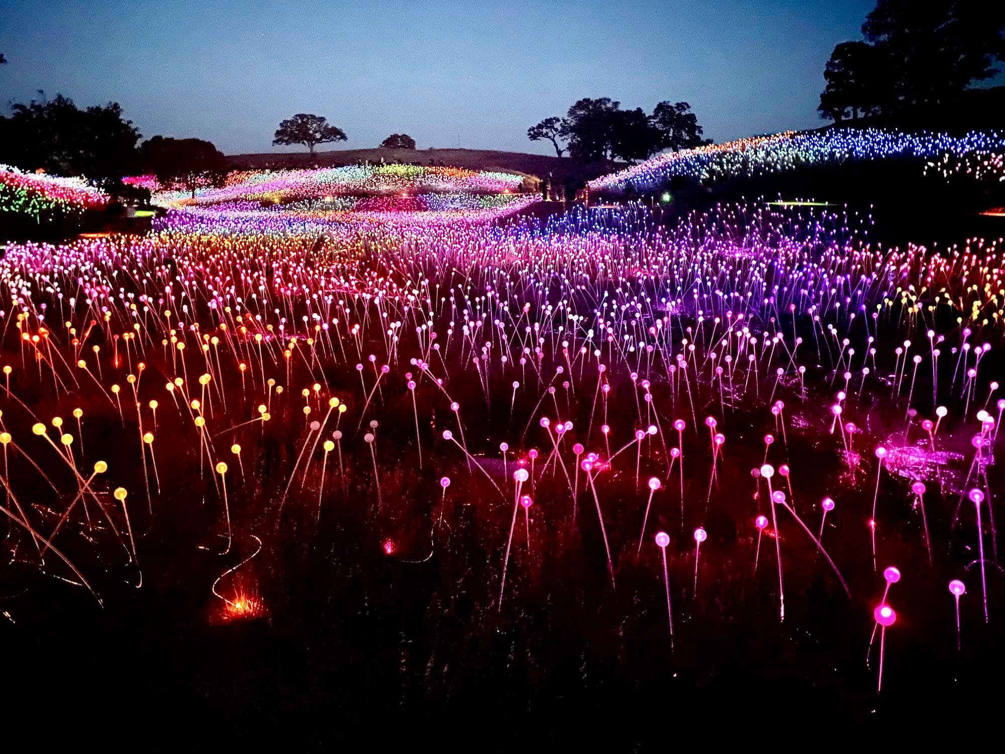 Sensorio Field of Lights in Paso Robles