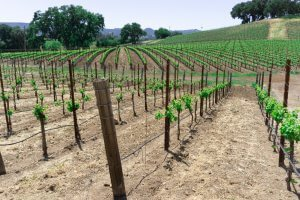 What To Do in Paso Robles In One Day