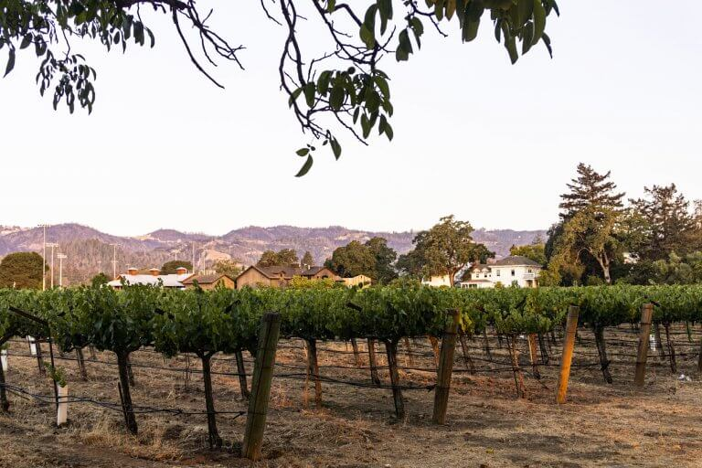 Wine Tasting In Napa Valley–Everything You Need To Know