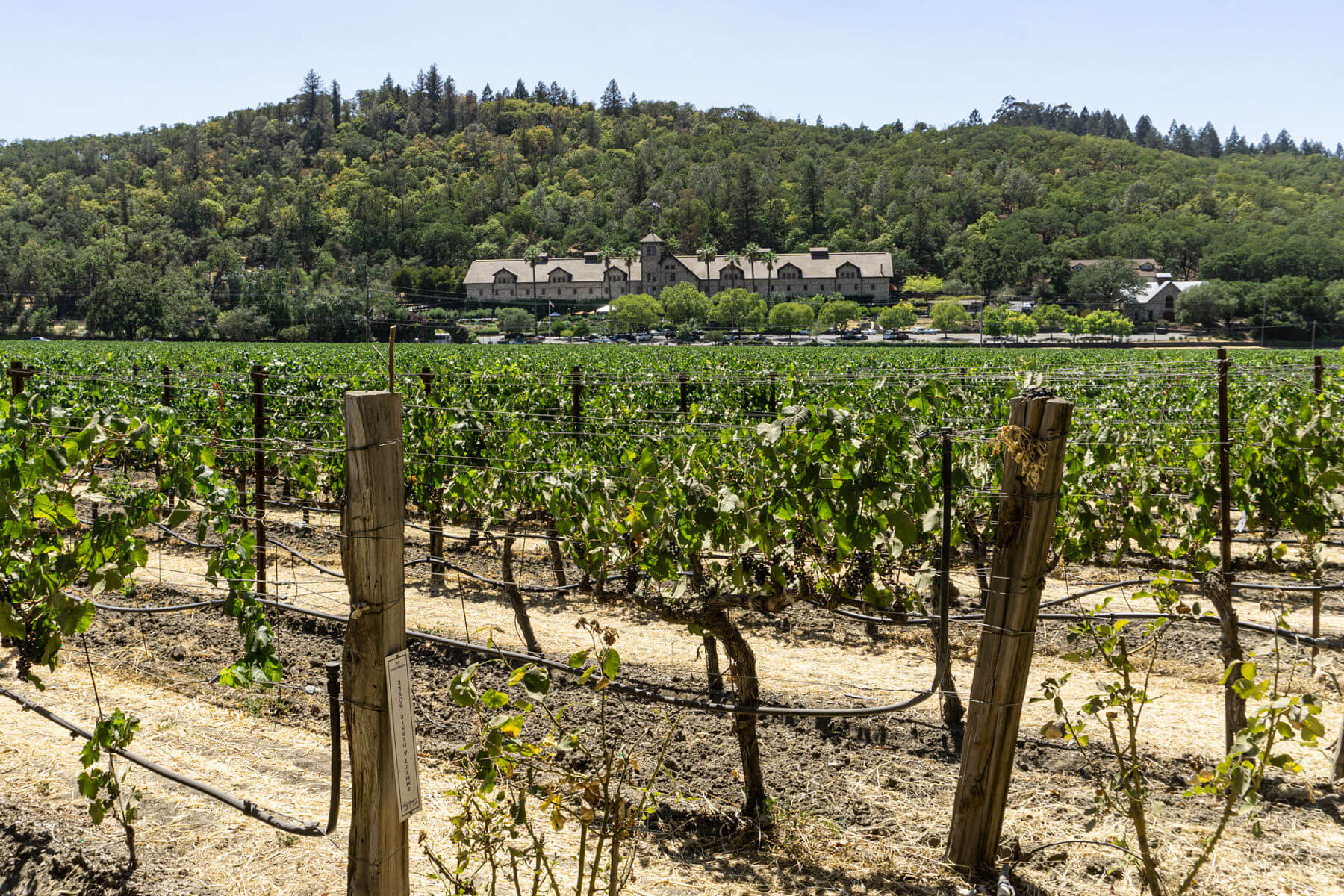 Charles Krug Vineyards